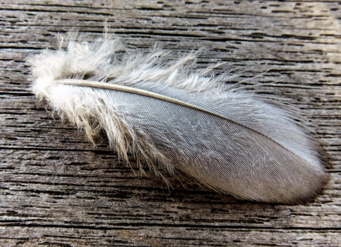 feather-2535588_1920